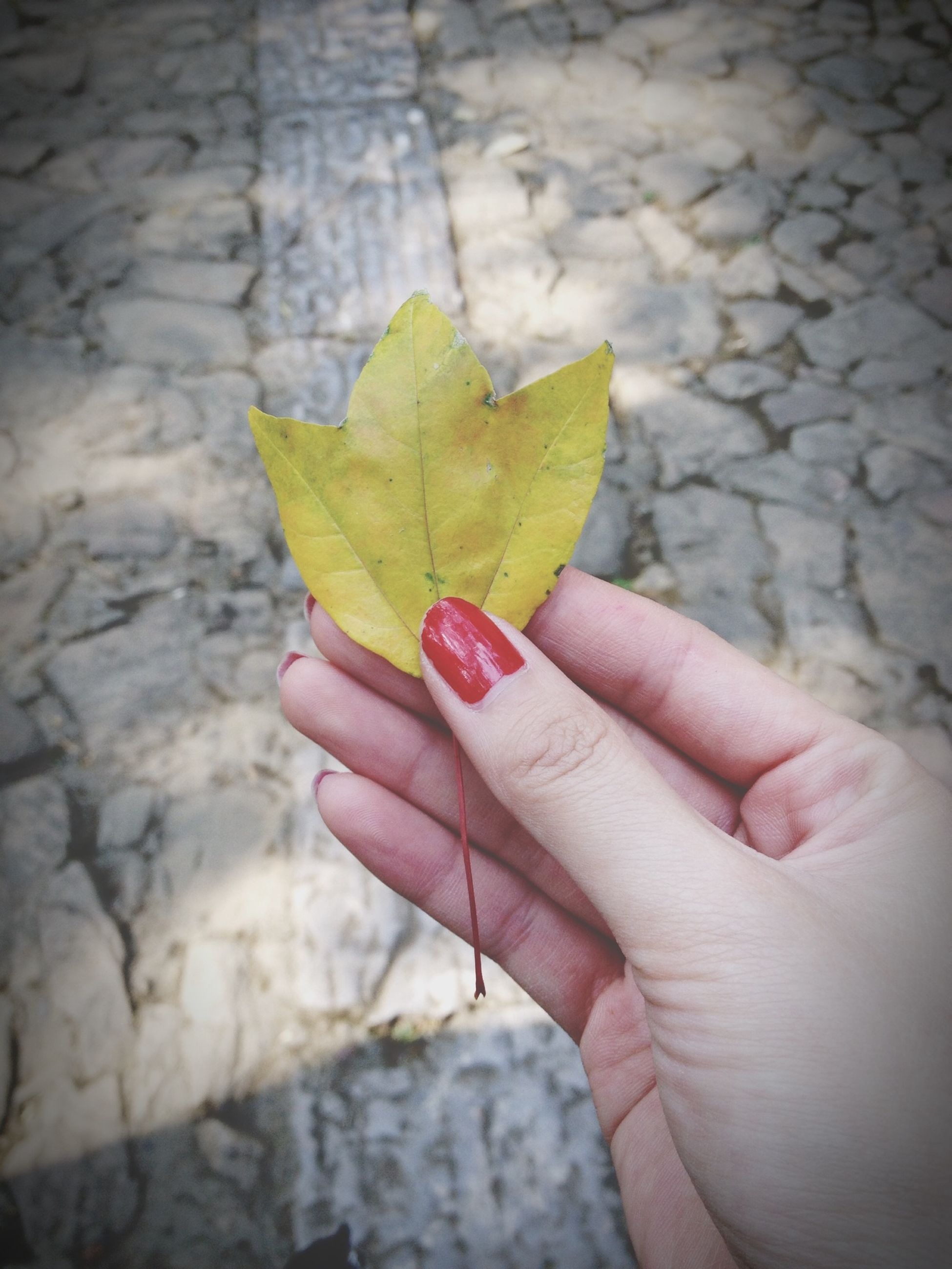 person, holding, part of, human finger, cropped, leaf, close-up, unrecognizable person, personal perspective, lifestyles, leisure activity, focus on foreground, leaf vein, nature, yellow, fragility, day