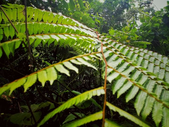 The jungle Leaf Nature Green Color Plant Beauty In Nature Fern No People