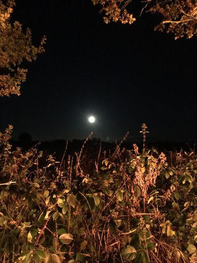 Night Firelight Bonfire Moon