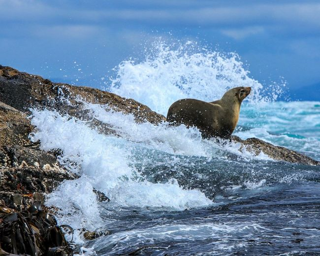 Sea lion on rock at beach