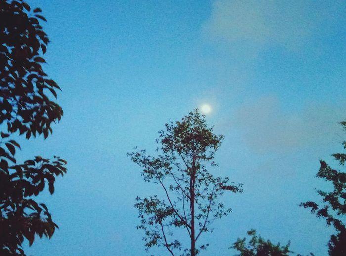 Moon river Tree