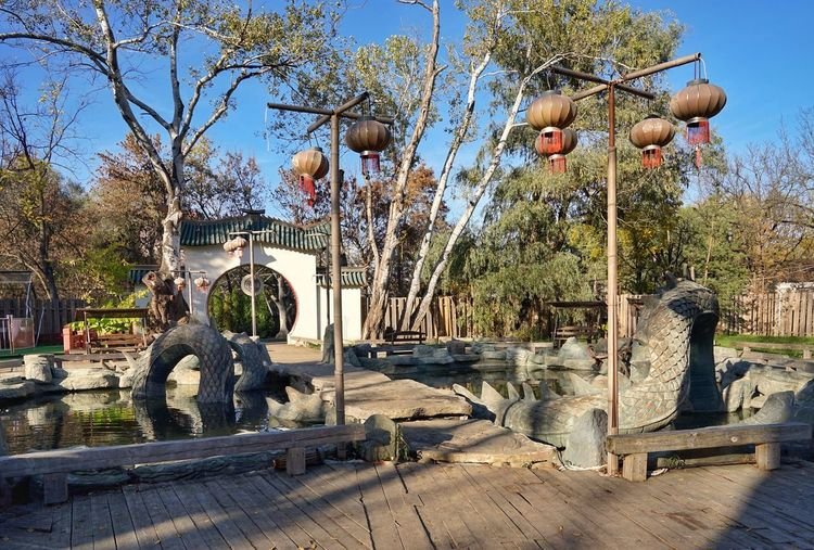 Tree Amusement