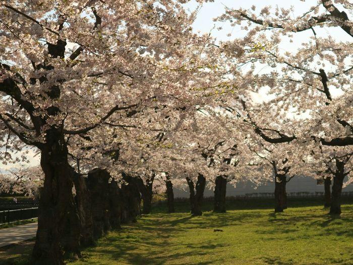Tree Beauty In