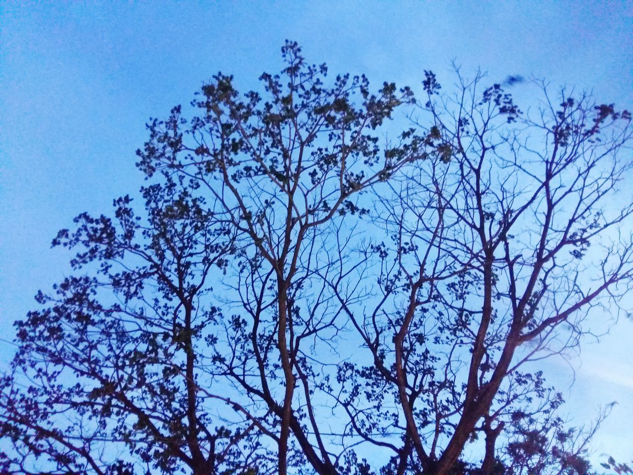 low angle view, tree, nature, branch, sky, growth, outdoors, clear sky, blue, beauty in nature, no people, day, freshness