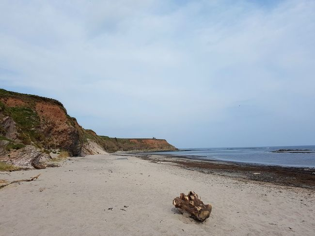 Sea Beach Scenics Tranquil Scene Nature Sand Landscape Tranquility Outdoors Water Beauty In Nature No People Day Wave Horizon Over Water Sky Driftwood