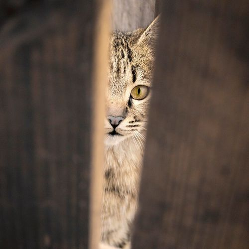 Stree Photography Cat Photography