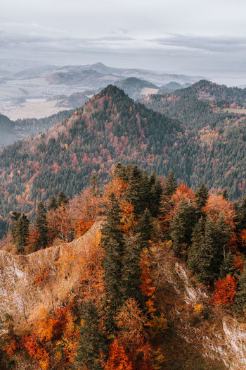 High angle view of autumn trees on mountain