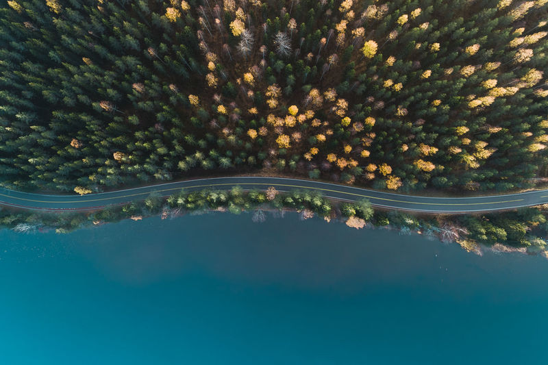 Aerial view of trees by lake
