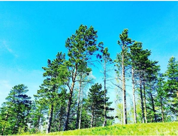 Clear Sky Greenery Howisee Clear Sky Low Angle View Nature Tree