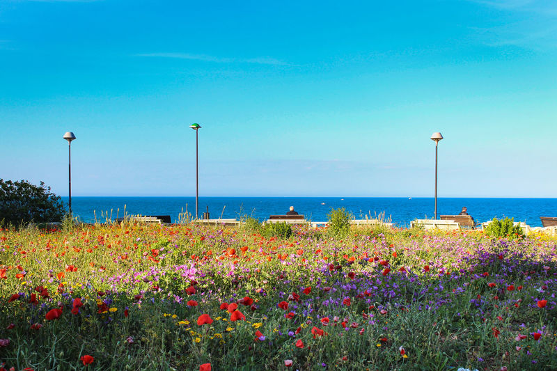 Scenic View Of Flowering Plants By Sea Against Blue Sky