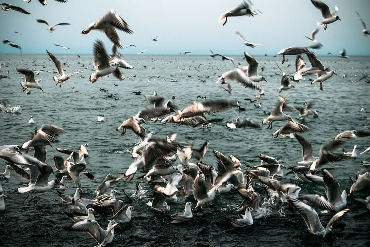 Flock of birds flying over sea