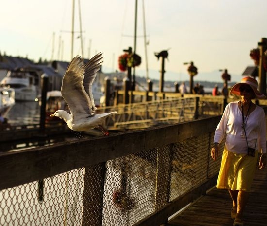 Showcase April we have a jumper Seagull Streetphotography