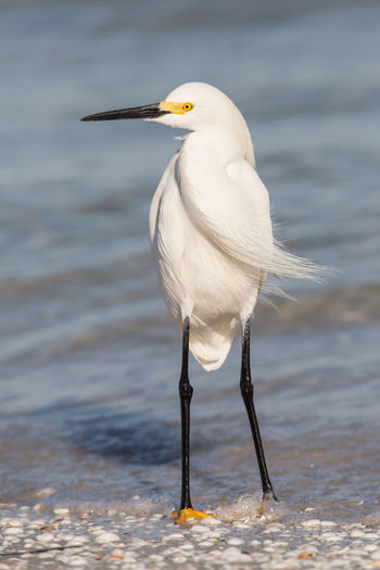 Egret perching at beach