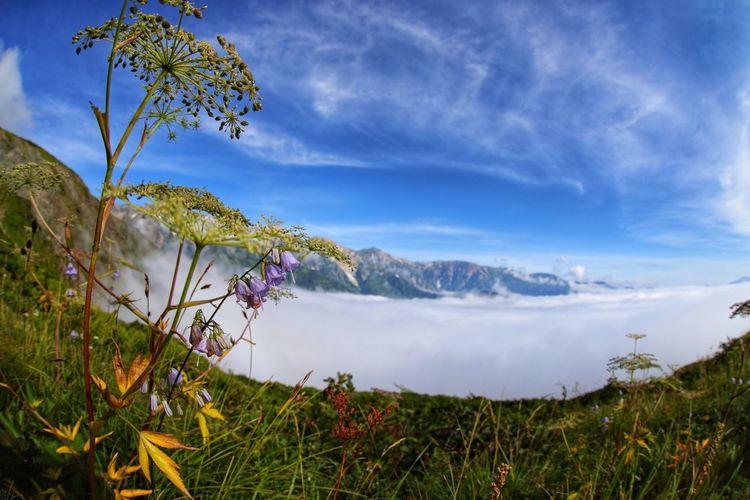 今日はギブアップ😅トレーニングしないと💦 Flower Mountain Tree Water Beauty Multi Colored Adventure Photograph Blue Defocused