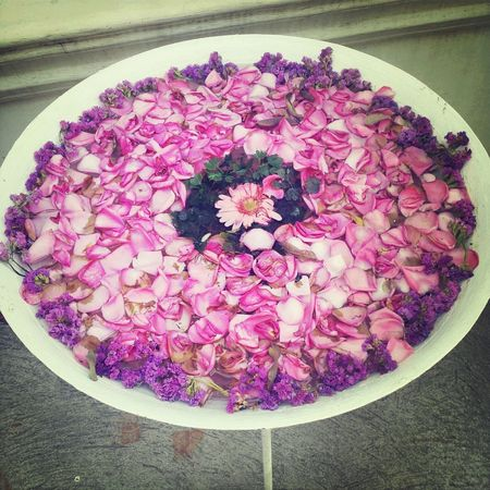 pink and purple. petal and flowers.