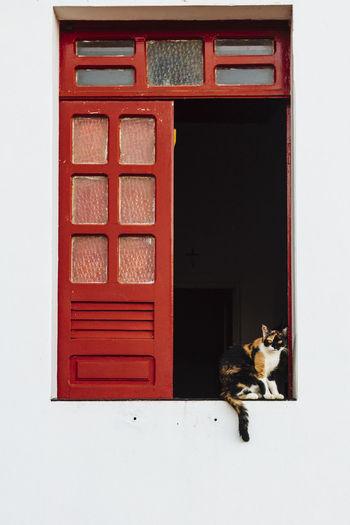 Cats Of EyeEm Animal Themes Cat Cat♡ Domestic Animals Domestic Cat Mammal No People One Animal Pets Window Window Frame Pet Portraits