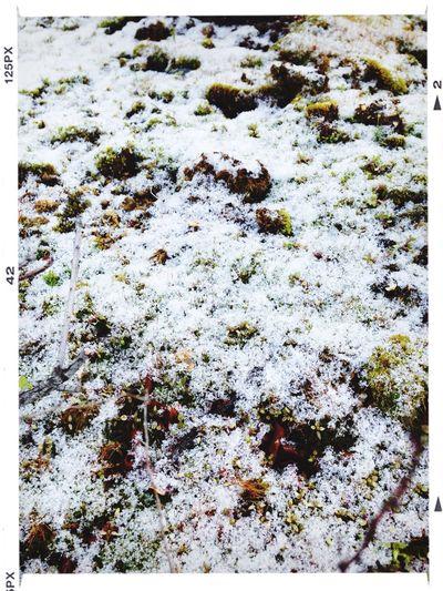 日影にはうっすら雪が。 Walking Around