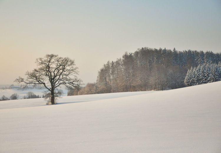 Winter Bayern Snow Pristine Snow Winter Wonderland Winter Trees Trees Tree TreePorn Schnee Schneelandschaft Landscapes With WhiteWall
