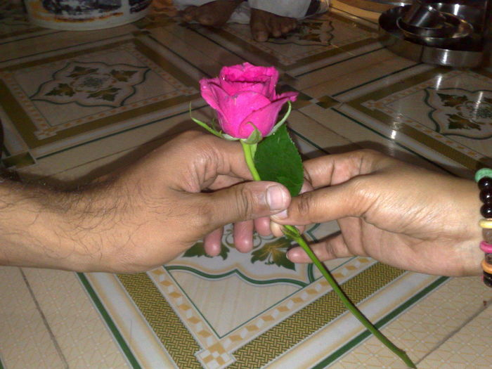Rosé Rose With Buds Love To Take Photos ❤ Feel The Journey