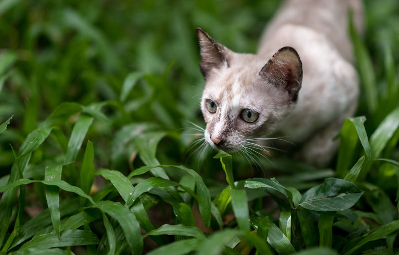 Cat Cats Of EyeEm Cute Cat Cute Pets Animal Themes Cat Cat Lovers Cat♡ Close-up Day Domestic Animals Domestic Cat Feline Grass Green Color Kitten Leaf Mammal Nature No People One Animal Outdoors Pets Portrait Selective Focus