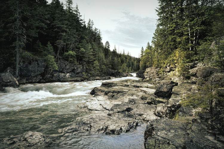 Creek Avalanche  River Rocks Pines Rapids Glacier National Park Water Rushing Fast Flowing Trees Montana USA Color Image Photography No People Forest Beauty In Nature Outdoors Flowing Water Sky Wilderness