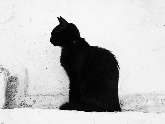 The Graphic City Animal Blackandwhite Cat Close-up Day Minimalism Nature Outdoors Urbanphotography