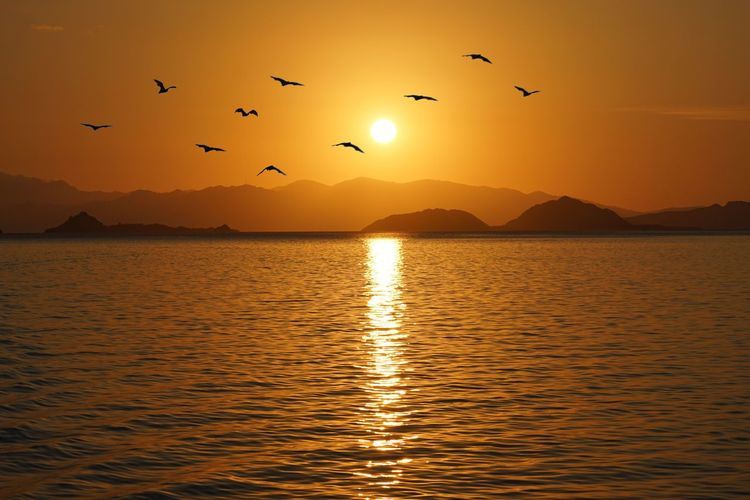 Golden hours when the bats fly out Sunset Animal Themes Bird Animal Vertebrate Water Animals In The Wild Scenics - Nature Mountain Flying Reflection Large Group Of Animals Waterfront Orange Color Group Of Animals Beauty In Nature Animal Wildlife Sky Silhouette Sun
