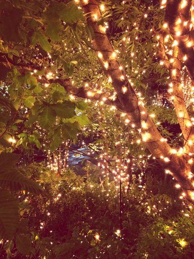 Light November
