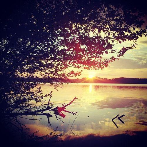 Sunset Jessern Lake Tree Sun Lightreflex Water
