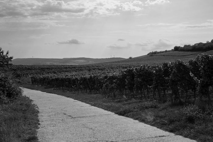 Agriculture Nature Outdoors Sky Landscape No People Cloud - Sky Rural Scene Day Beauty In Nature Blackandwhite Photography Black & White Blackandwhite Beauty Winemaking Winery Wine Deutsche Weinstraße EyeEm Selects Weinstraße Beauty In Nature Vineyard Nature