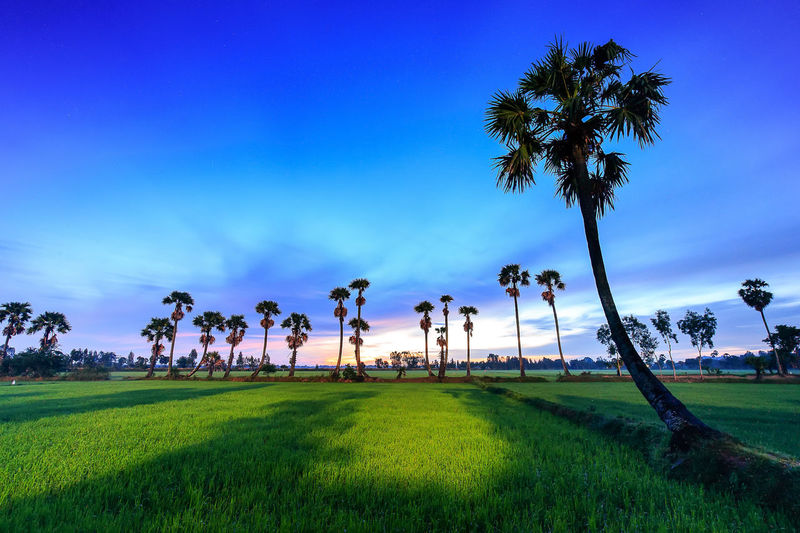Beauty In Nature Blue Day Golf Golf Course Grass Green - Golf Course Green Color Growth Nature No People Outdoors Palm Tree Scenics Sky Tranquil Scene Tranquility Tree Tree Trunk