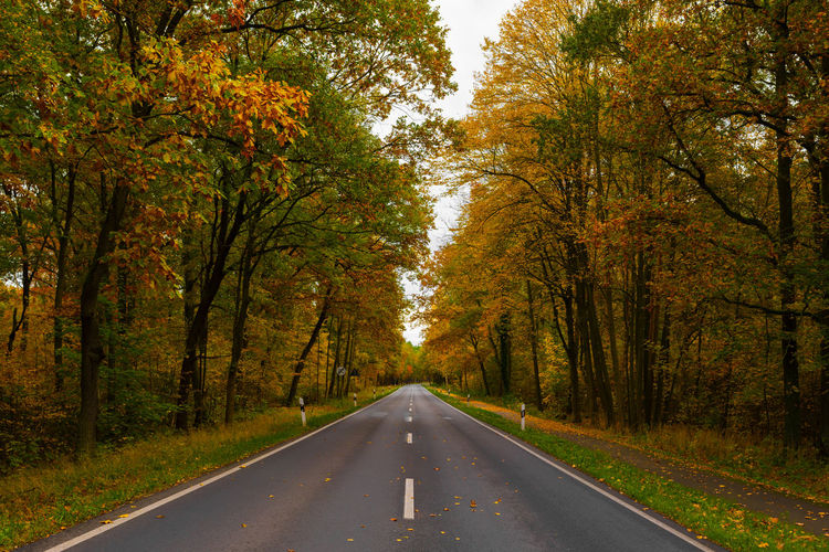 Empty road along trees in forest during autumn