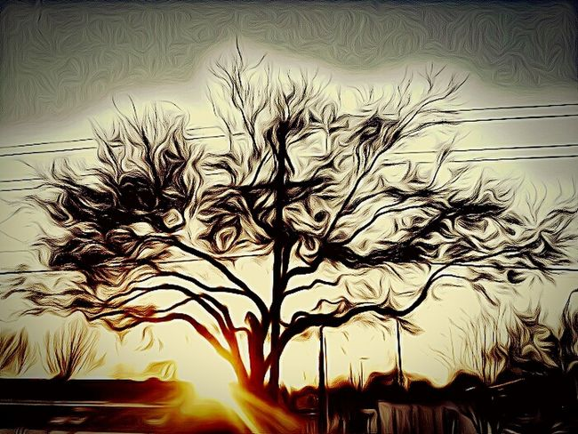 Sunset Sunset_collection Sunset Through The Trees Showcase: February Sunset Silhouettes Paint Edit Paint 43 Golden Moments