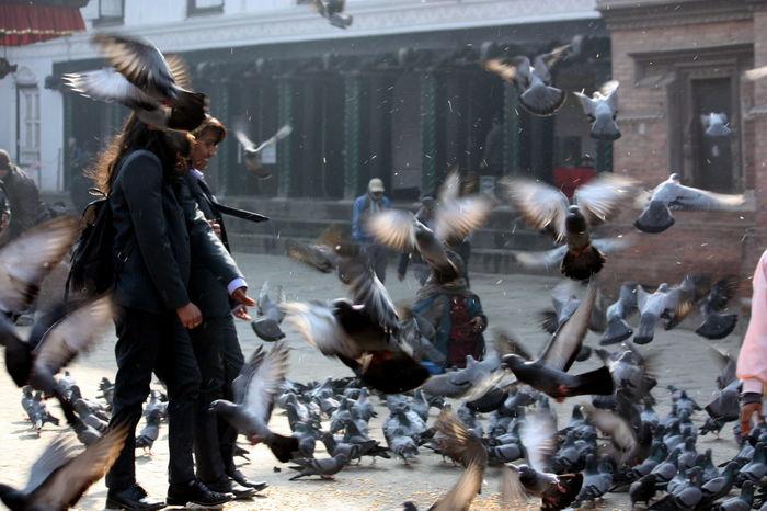 Schoolgirls on Kathmandu Durbar Square Kathmandu Nepal Pigeons Pigeons Everywhere SchoolGirl Schoolgirls Street Photography Streetphotography Travel Travel Photography Up Close Street Photography Girl Power Durbar Square Kathmandu, Nepal Adventures In The City