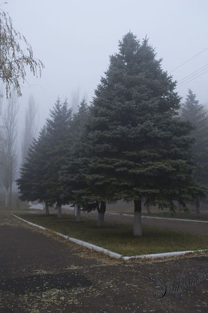 Park Fog Енакиево дно