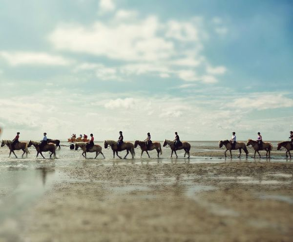 On A Health Kick Animals Horses Ride A Horse EyeEm Best Shots EyeEm Nature Lover Sea Karavan Harmony Beauty