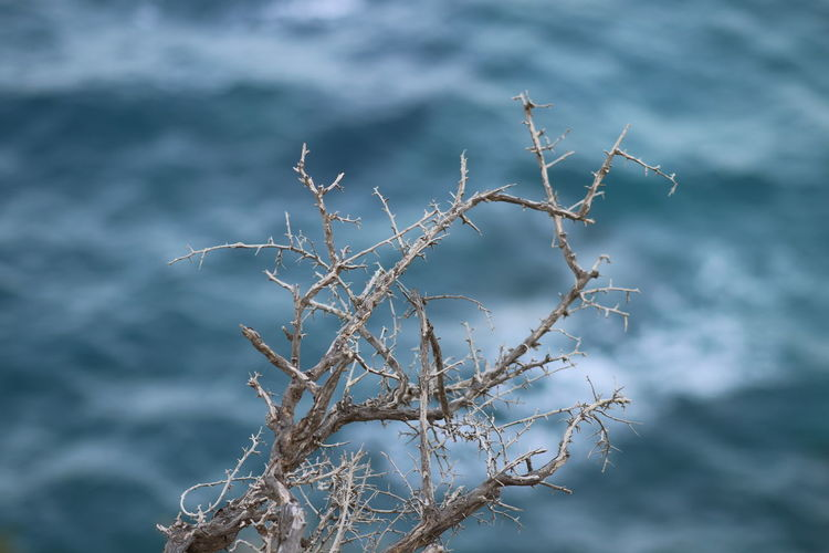 Water Beauty In Nature Nature Day Outdoors Sea Pine Tree Akamas Paphos Cyprus Nature_collection Nature Photography Naturelovers Nature Park  Wave Wave Pattern