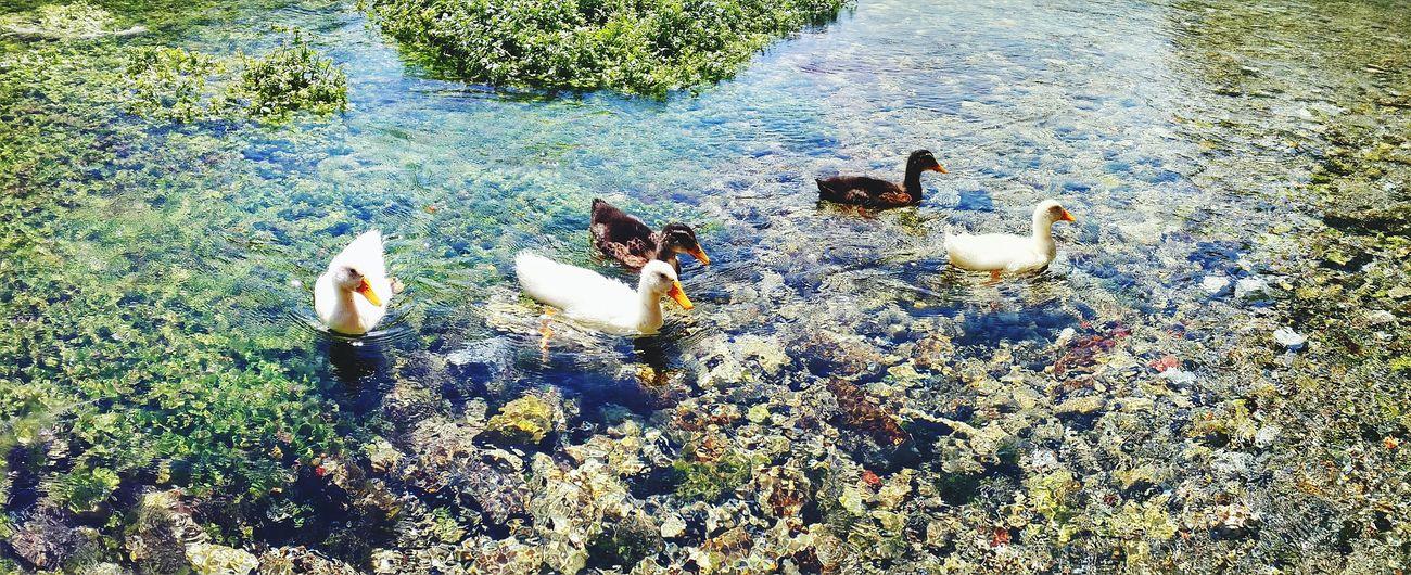 Ducks Natural Searche S4