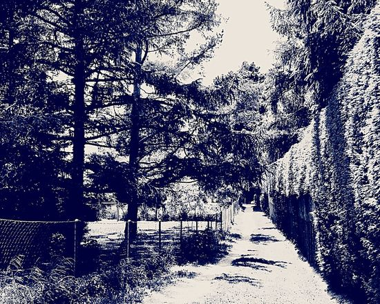 Chemin Sentier Sentiero Beauty In Nature Black And White Noir Et Blanc Bianco E Nero Stonegraphix The Great Outdoors - 2017 EyeEm Awards EyeEmNewHere No People
