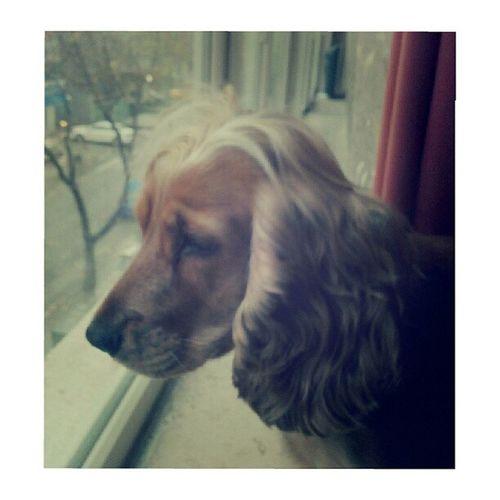 Cute Beauty Dog Instacool Lili Farabi Eyesofmoon
