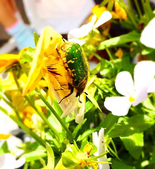 Beetle Bug Green Green Color Incects Flowers Nature Garden
