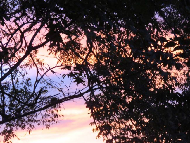 No edit Tree Nature Growth Branch Beauty In Nature Tranquility Sunset Outdoors Silhouette No People Scenics Sky Day
