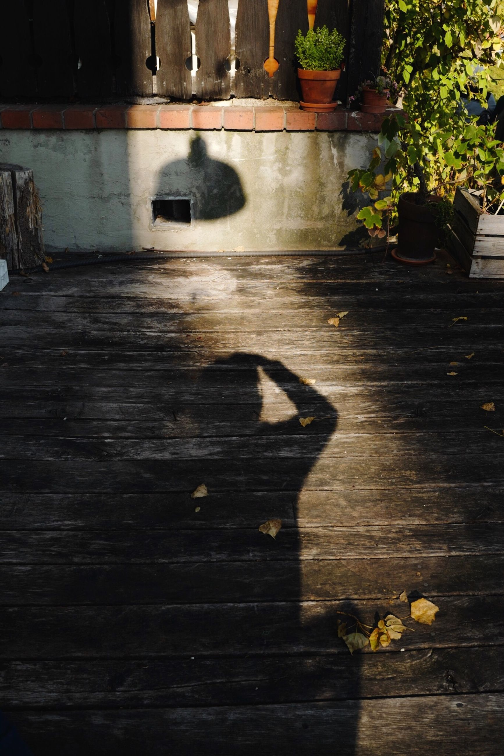 shadow, sunlight, nature, no people, day, architecture, built structure, wood - material, outdoors, building exterior, wall - building feature, plant, flooring, footpath, wood, domestic cat, cat, one animal, focus on shadow