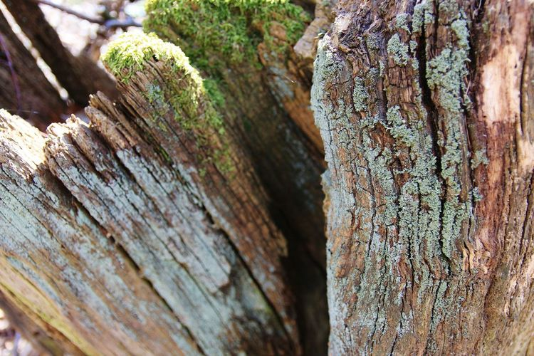 Baumstamm Colours Of Tree Moss Green Colours Tree Tree Trunk Textured  Wood - Material Close-up