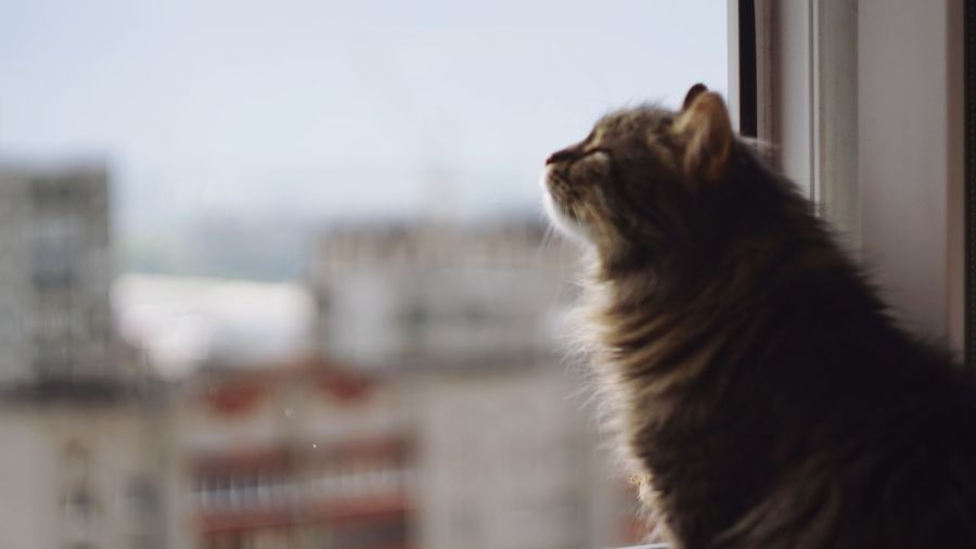 Sitting Window