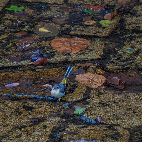 High angle view of birds on rock