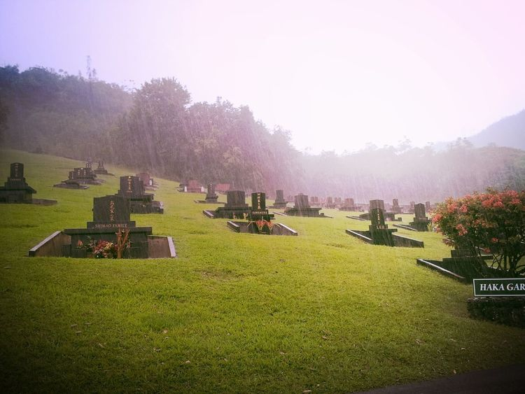 Rainy Day Graveyard Beauty Valley Of The Temples