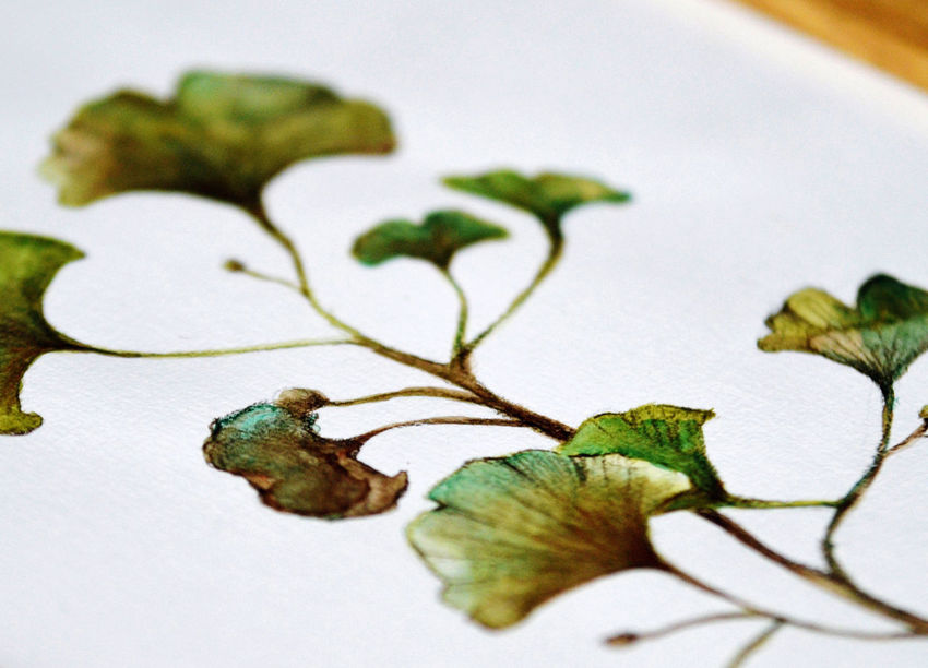 Artist Ginkgo Ginkgo Biloba Pain Paint The Town Yellow Art Close-up Day Freshness Ginkgo Leaf Green Color Indoors  Leaf Nature No People Painting Pattern Studio Shot Watercolor Watercolor Painting White Background