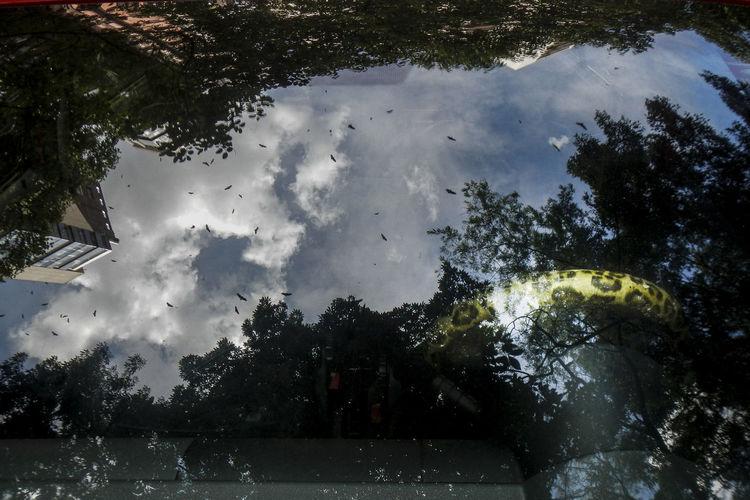 Trees by lake against sky during rainy season