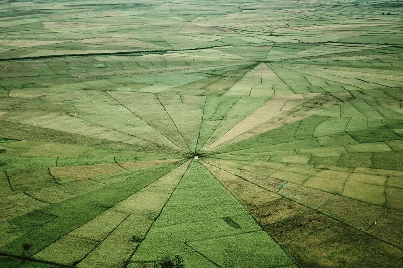 Agriculture ASIA Beauty In Nature Day Flores Green Growth INDONESIA Landscape Nature No People Nusa Tenggara Timur Outdoors Patchwork Landscape Rice Field Rice Paddy Rural Scene Rural Scenes Scenics Spider Web Rice Fields Tranquil Scene Travel Perspectives On Nature